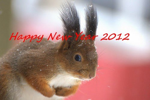 AUGURI DI BUON ANNO 2012 A TUTTI dans una bella rosa Squirrel-In-The-Snow-Mustamae-Estonia-SunCat3