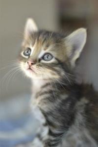 I love...cats