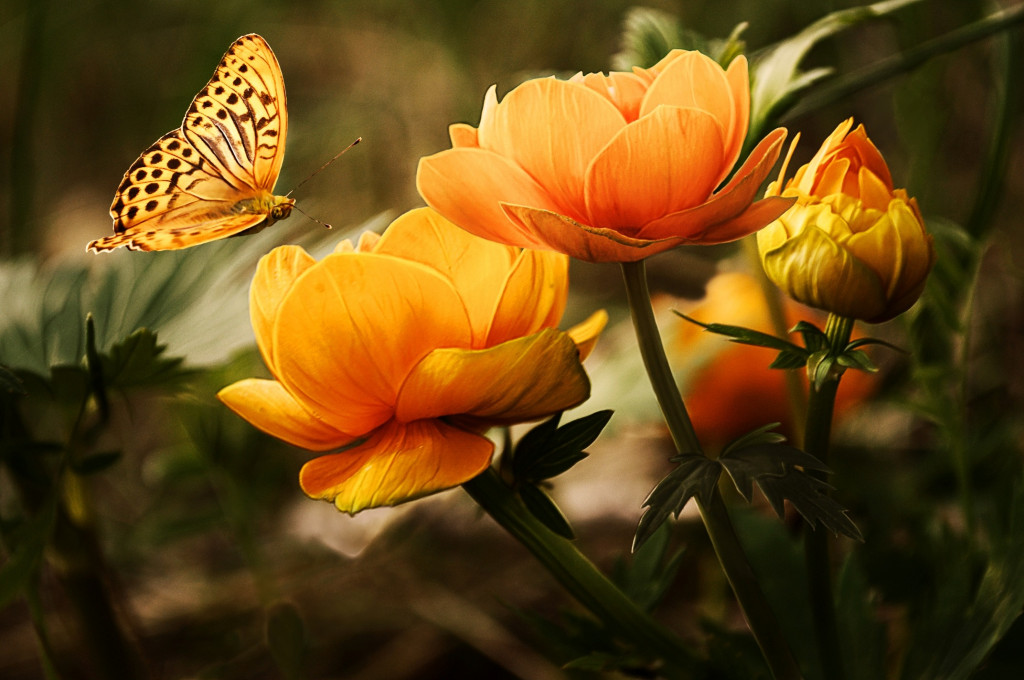 flowers-background-butterflies-beautiful-87452