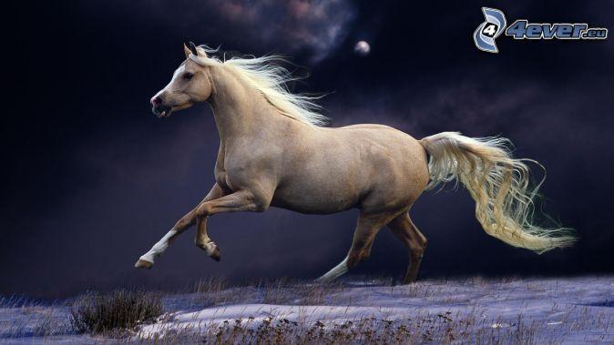 cavallo-bianco,-notte,-cavallo-in-corsa-169025