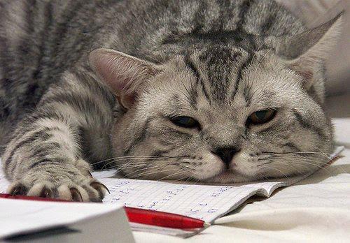 stanco di studiare