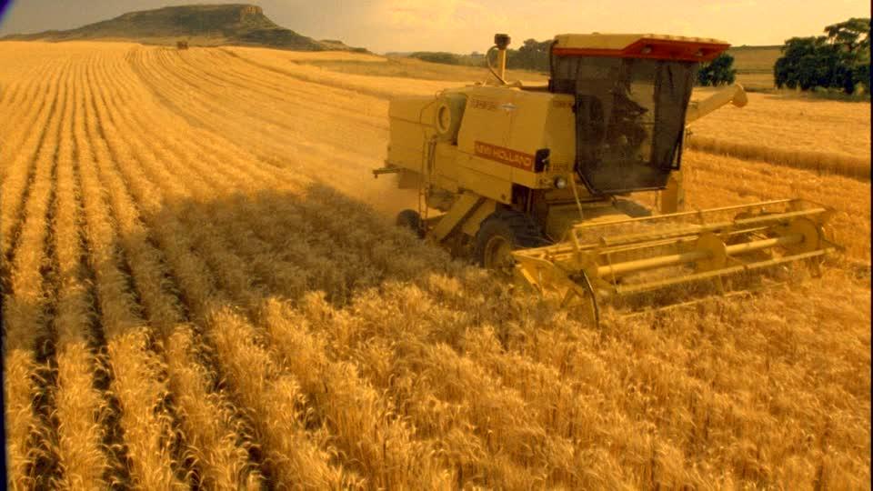 672073238-raccolta-del-grano-campo-di-stoppie-raccolto-macchina-per-raccolta