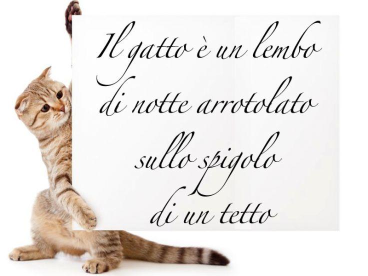 aforismi-frasi-gatti
