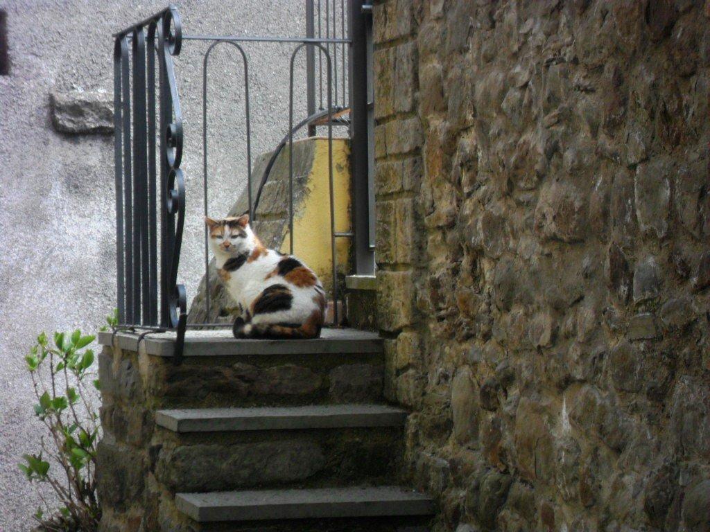 008.-Se-cè-il-gatto-ci-sarà-una-famiglia-ph.-Fresta