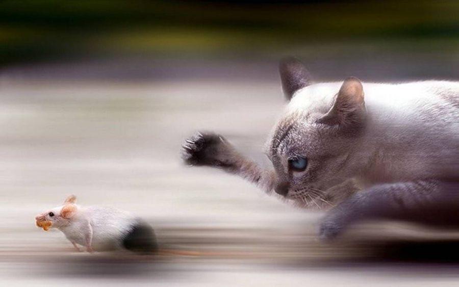 gatti-ratti