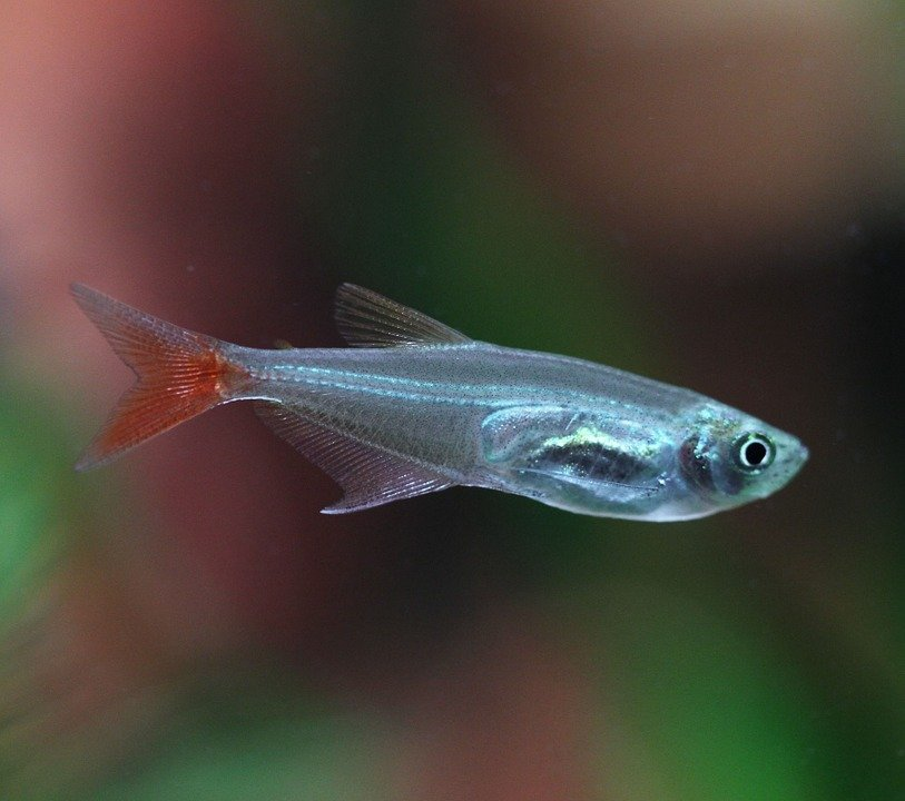 fish-723829_960_720